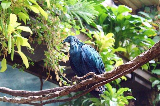 Bird, Blue, Jungle, Green, Central Park Zoo, Peacock
