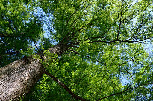 Wood, Forest, Nature, Leaves, Green, Branches, Light