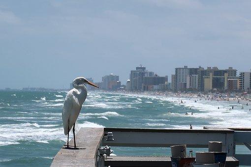 Heron, Egret, Beach, Branding, Coast, Holiday, White