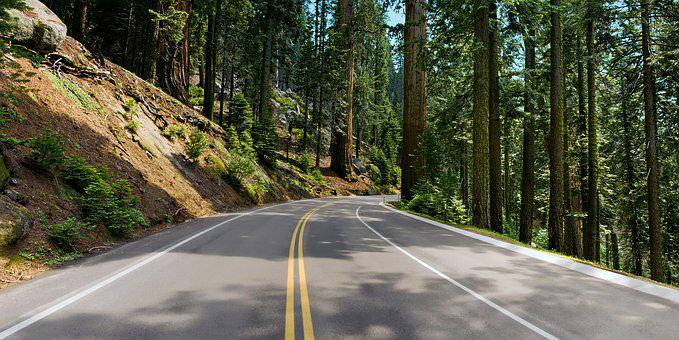California, Redwood National Park, Driving, Paved Road