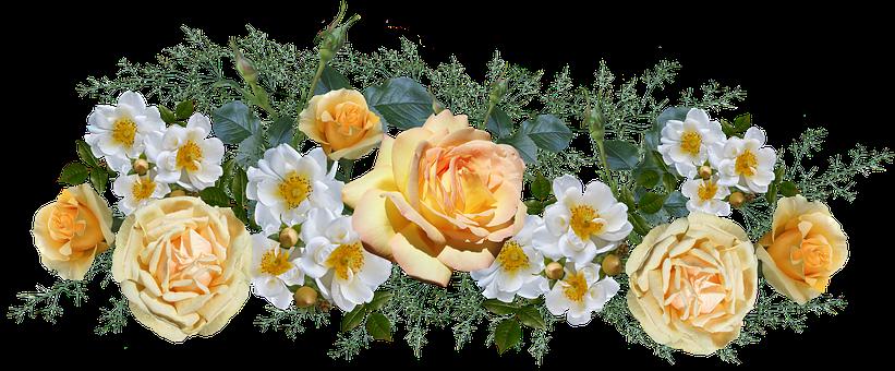 Flowers, Roses, White, Yellow, Arrangement
