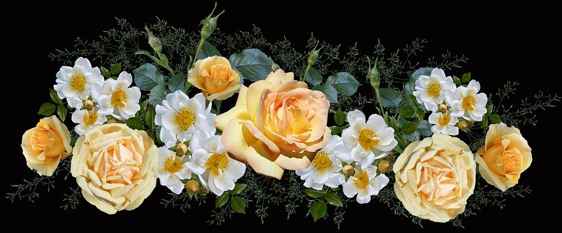 Roses, White, Yellow, Blooms, Arrangement, Garden