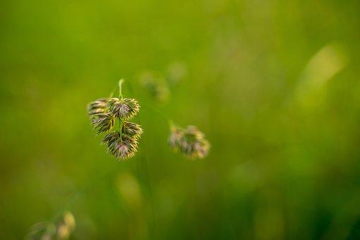 Meadow, Wild Meadow, Litter Meadow, Scrub, Mood, Green