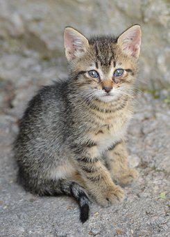 Croatia, Nature, Cat, Pet, Natural, Animal, Kitten