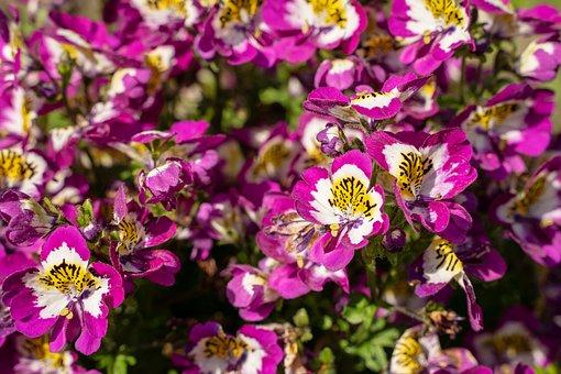Flowers, Plant, Purple, Yellow, White, Summer, Nature