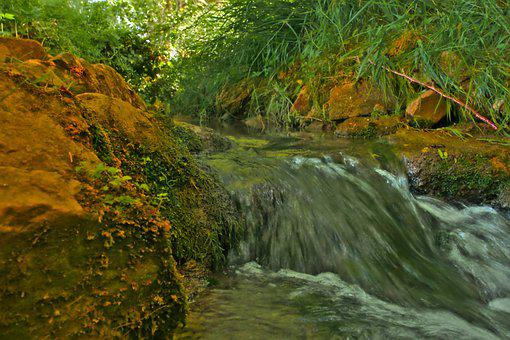 Bach, Creek, Water, Landscape, Nature, Forest, Scenic