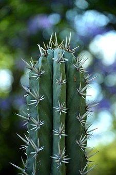 Park, Plant, Green, Cactus, Nature, Botany, Natural