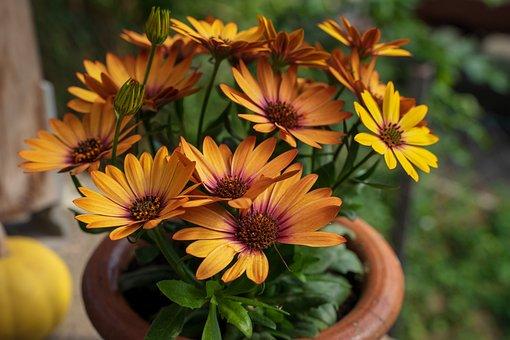 Potted Plant, Flower, Plant, Nature, Garden, Petal, Pot