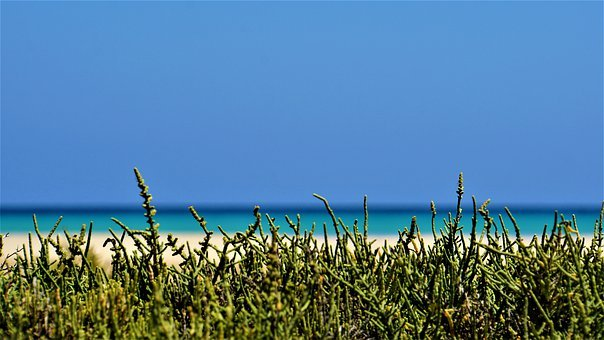 Beach, Ocean, Sea, Dune Plants, Sand, Blue, Salt Water