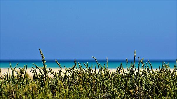 Beach, Ocean, Sea, Dune Plants, Sand, Blue, Salt Water