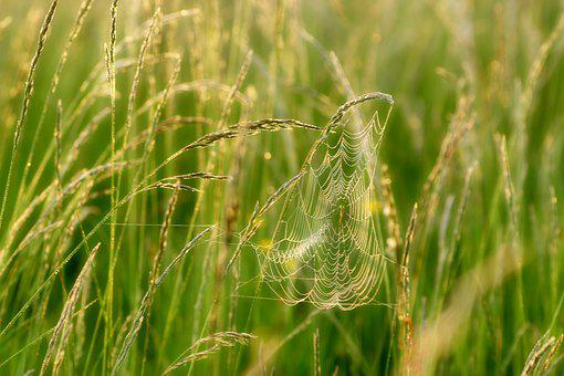 Cobweb, Web, S, Spider, Nature, Drop Of Water, Dewdrop