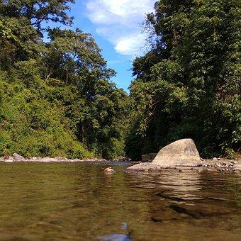 Clear Stream, Water, Fresh, Virgin Woods, Calm Water