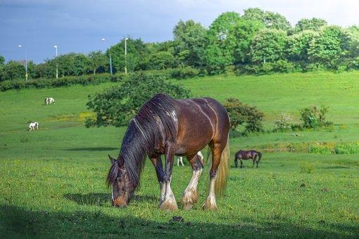 Animal, Beautiful, Brown Horse, Domestic, Eat