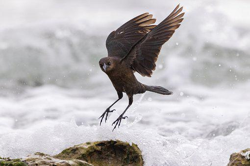 Sea, Motion, Water, Nature, Animal, Bird, Day, Outdoors