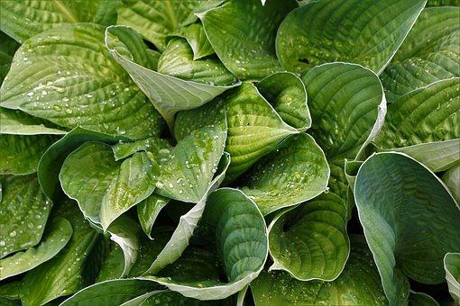 Plant, Green, Nature, Garden, Leaf, Organic, Bio