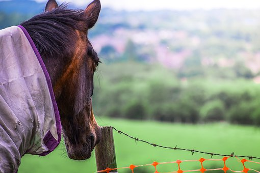Animal, Back, Background, Brown, Brown Horse, Chain