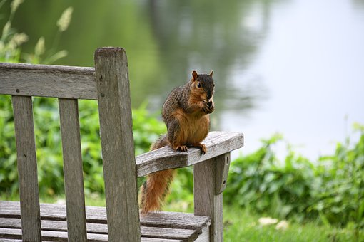Fox, Squirrel, Cute, Park, Nut, Nature, Claws, Tail