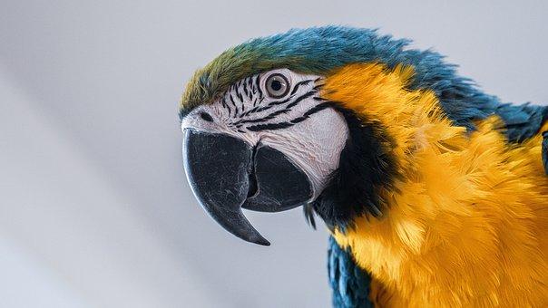 Parrot, Ara, Bird, Colorful, Exotic, Animal, Nature