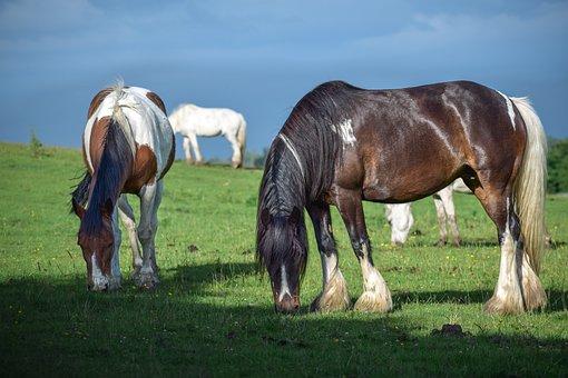 Animal, Beautiful, Brown Horse, Eat, Farm, Feeding