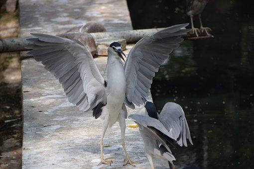 Bannerghatta Biological Park, Water, Fish, Crane, Bird