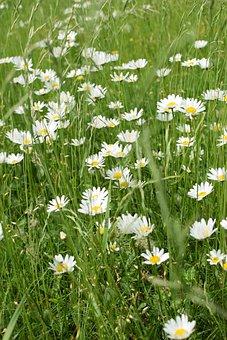 Meadow, Flowers, Bee Meadow, Margin Renon
