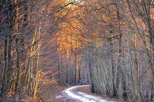 Forest, Winter, Nature, Trees, Landscape, Cold, Snow
