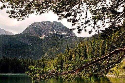 Trees, Mountain, Landscape, Nature, Lake, River