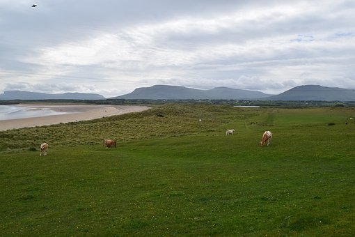 Landscape, Ireland, Nature, Mountains, Cows, Reported