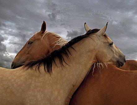 Horse, Love, Horses, Nature, Friendship, Equine, Couple