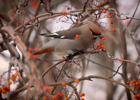 Nature, Animal, Bird, Day, Outdoors, Bare Tree