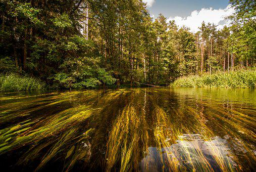 River, Forest, Water, Landscape, Nature, Stream, Trees