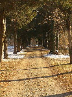 Path, Road, Country, Nature, Trees, Pathway, Scenic