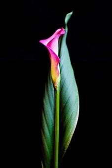 Flower, Bloom, Blossom, Plant, Pink, Petals, Spring