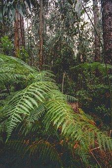 Forest, Rainforest, Nature, Jungle, Green, Environment