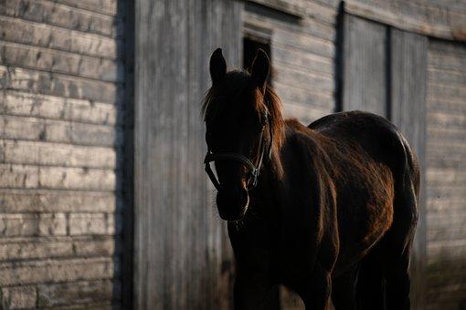 Horse, Shadow, Farm, Barn