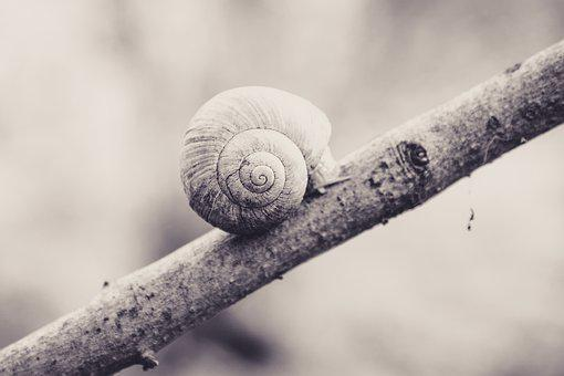 Snail, Shell, Branch, Background, Monochrome