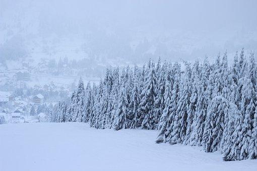 Winter, Snow, Nature, Landscape, Trees, White, Cold