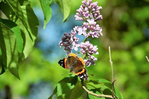 Butterfly, Closeup, Antennas, Tongue, Black, Shiny