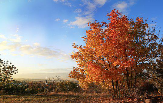 Autumn, Sunset, Tree, Nature, Landscape, Village