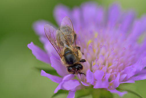 Bee, Blossom, Bloom, Flower, Nectar, Bee Deaths