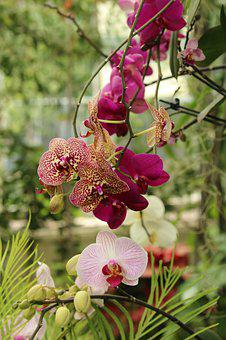 Orchid, Flowers, Blossom, Greenhouse, Nature, Bloom
