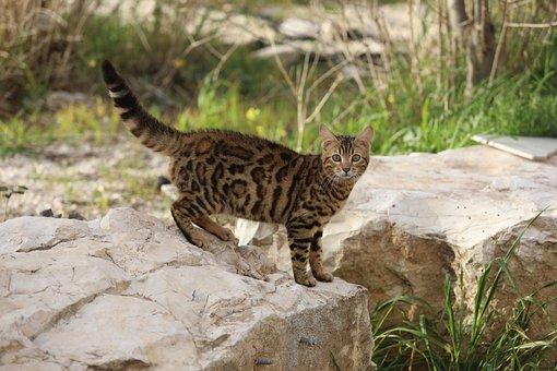 Cat, Funny Cat, Cute Cat, Cute, Cat Compilation