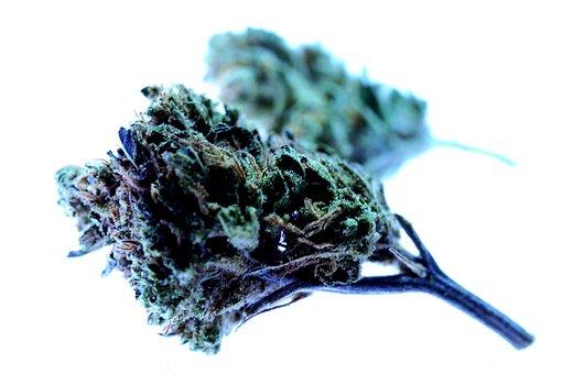 Drug, Marijuana, Cannabis, Smoke Shop, Drugs, Cure