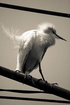 Bird, Photo, Stand, Nature, Animal, Wildlife, Frame