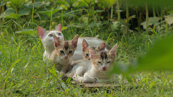 Cat, Cat Family, Cute, Pet, Kitty, Little, Young