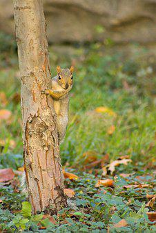 Animal, Chipmunk, Nature, Furry, Wildlife, Rodent