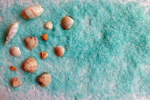 Shell, Sea, Beach, Ocean, Vacations, Sand, Summer
