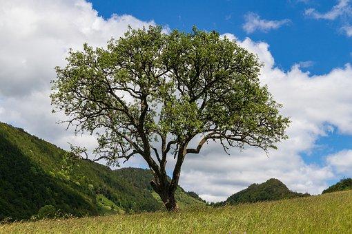 Langenbruck, Tree, Lonely, Hiking, Switzerland, Jura