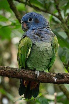 Animal, Parrot, Rainforest, Tropical, Animal World