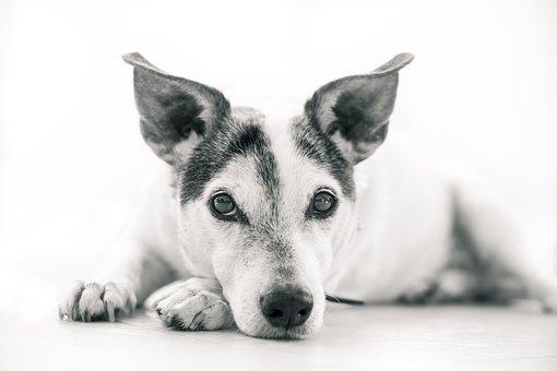 Dog, Animal, Pet, Animals, Dogs, Cute, Mammal, Pets